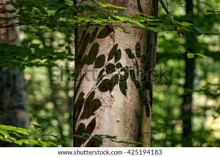 Beautiful beech forest at spring - stock photo