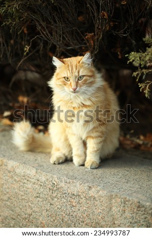 Beautiful big cat, outdoors - stock photo