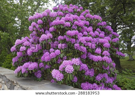 Large flowering bushes 28 images mixed buddleia for Large bushes for landscaping
