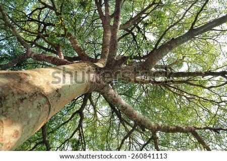 beautiful big tree  - stock photo