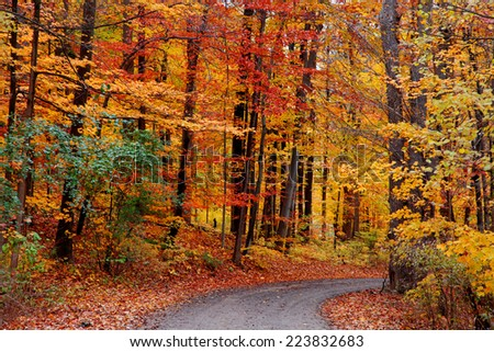 Beautiful bike trail through autumn trees - stock photo