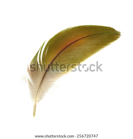 Beautiful bird feathers, Beautiful Macaw feathers - stock photo