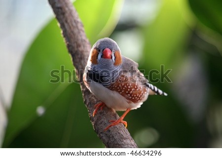 Beautiful bird on a branch - stock photo