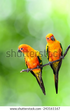 Beautiful bird,Sun Conure perched on branch. - stock photo