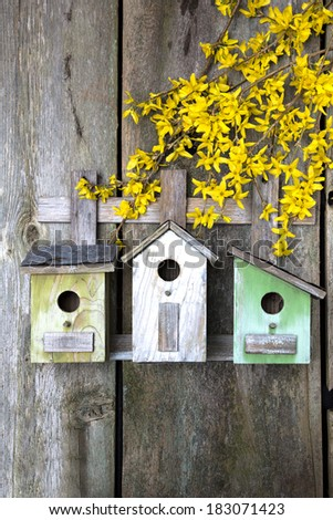Beautiful birdhouses with yellow Forsythia on old wooden fence - stock photo
