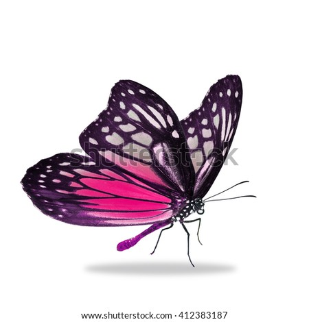 Beautiful black and pink butterfly isolated on white background - stock photo