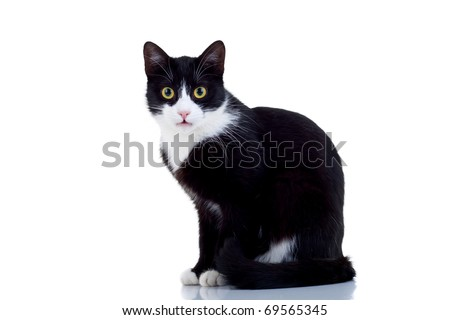 Beautiful black and white male cat over white - stock photo