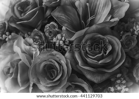 beautiful black and white  rose flower close-up. Custom made - stock photo