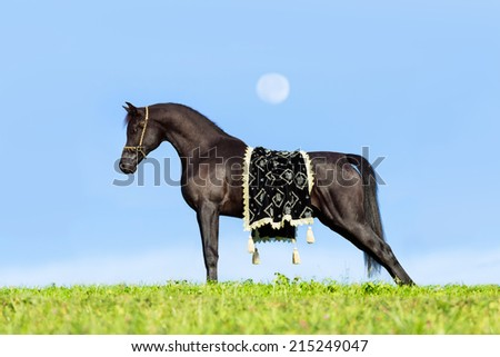 Beautiful black horse standing on blue sky with a moon - stock photo