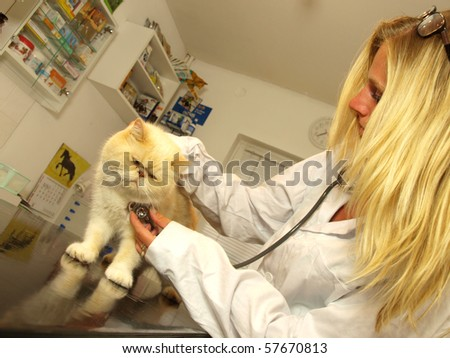 Beautiful blond young  Veterinarian examining a cat - stock photo