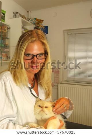 Beautiful blond young  Veterinarian examining a cat - stock photo