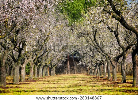 Beautiful blooming of decorative trees in colorful vivid spring park full of green grass, fairy heart of nature. - stock photo