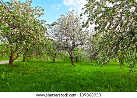 Beautiful blooming of decorative white apple and fruit trees over bright blue sky in colorful vivid spring park full of green grass by dawn early light with first sun rays, fairy heart of nature - stock photo