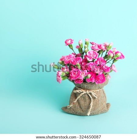 beautiful blooming of  pink carnation flowers on green blue background with copy space - stock photo