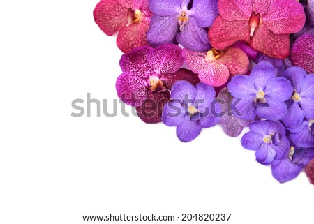 beautiful blooming orchid isolated on white background - stock photo