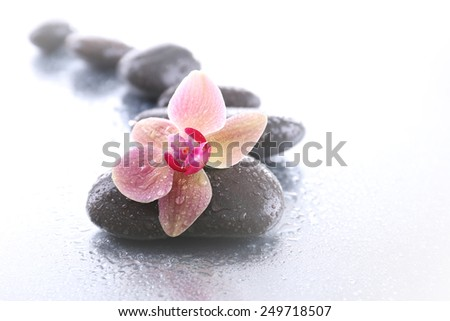 Beautiful blooming orchid  with spa stones on light background - stock photo