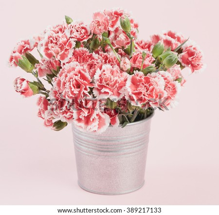 Beautiful blooming pink carnations on a pink pastel background. - stock photo
