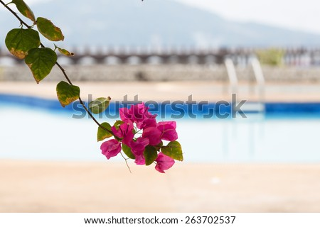 Beautiful blooming pink tropical flowers and the swimming pool on a background - stock photo
