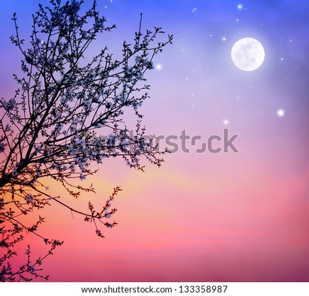 Beautiful blooming tree over dark night sky background, little white flowers on tree branch in moonlight, spring nature - stock photo
