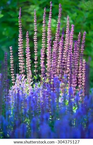 Beautiful blossoming plants in summer garden - stock photo