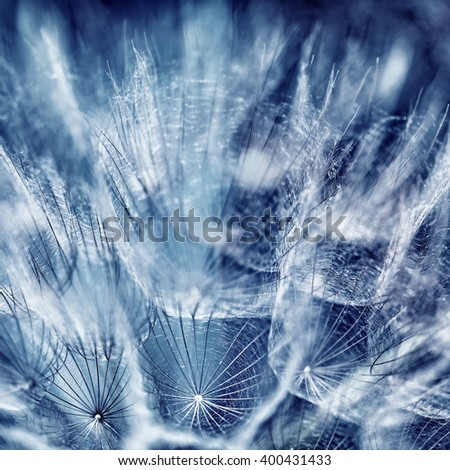 Beautiful blue abstract background, close up photo of dandelion flower, dreamy floral wallpaper, beauty of spring season - stock photo