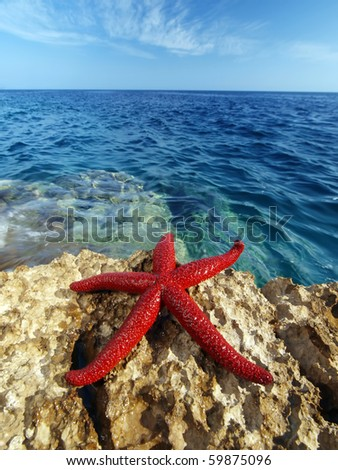 beautiful blue Adriatic sea with red starfish in foreground - stock photo