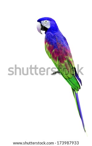 Beautiful Blue and green macaw parrot bird - stock photo