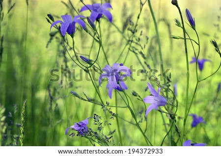 Beautiful blue bells on the meadow - stock photo