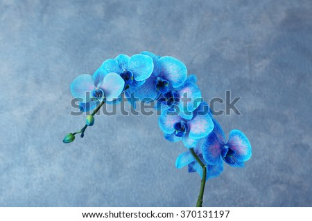 Beautiful blue orchid flower on grey background - stock photo