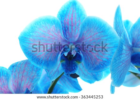 Beautiful blue orchid flower on white background - stock photo