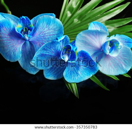 Beautiful blue orchid flowers on dark background - stock photo