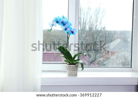 Beautiful blue orchid flowers on window board, close up - stock photo