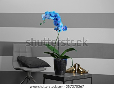 Beautiful blue orchid on the table in the room, close up - stock photo
