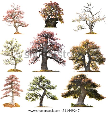 beautiful bonsai tree isolated on white background - stock photo