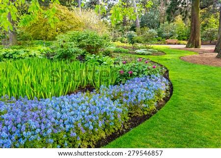 Beautiful, botanic garden in Spring. Beautiful Corydalis Flexuosa in full bloom, close up - stock photo