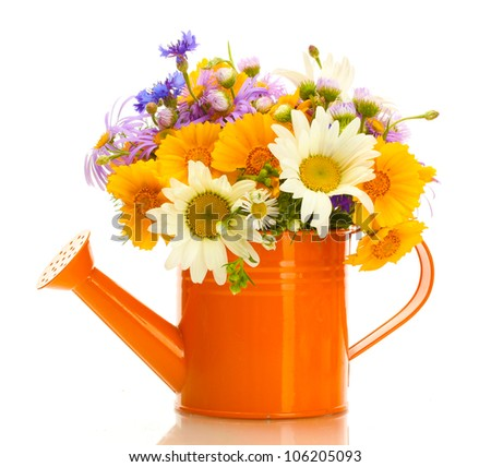 beautiful bouquet of bright  wildflowers in watering can, isolated on white - stock photo