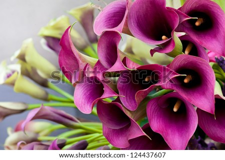 Beautiful bouquet of calla lilies. Abstract background. - stock photo