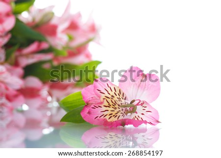 beautiful bouquet of flowers alstroemeria on a white background - stock photo