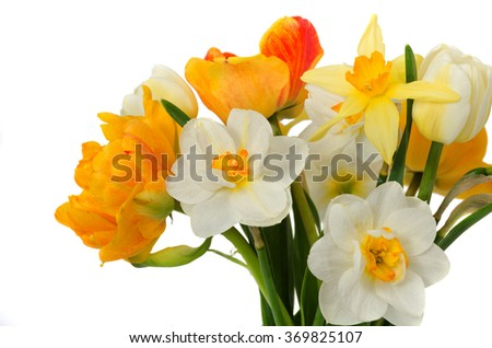 beautiful bouquet of fresh narcissus and tulips isolated on a white - stock photo