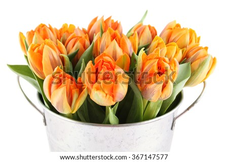 Beautiful bouquet of orange tulips in a aluminum pail. Isolated - stock photo