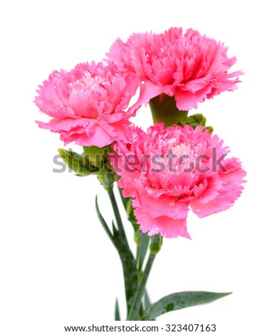 Beautiful bouquet of pink carnations flower isolated on white background - stock photo
