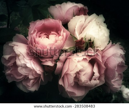 Beautiful bouquet of pink rose flowers on a dark background, soft and romantic vintage filter, looking like an old painting - stock photo