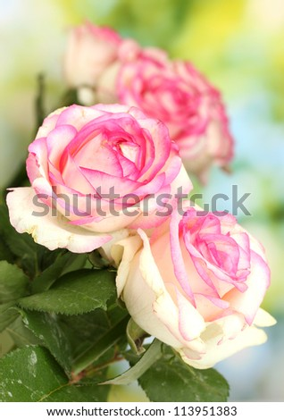 beautiful bouquet of pink roses, on green background - stock photo