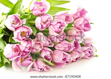 beautiful bouquet of purple tulips from the set - stock photo