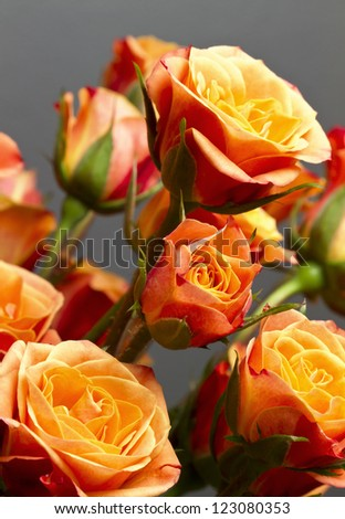 Beautiful bouquet of soft orange and yellow colored roses against gray backdrop. - stock photo