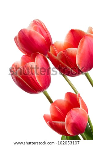 Beautiful bouquet of spring flowers. Red tulips on a white background - stock photo