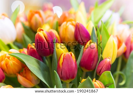 Beautiful bouquet of tulips in spring with blurred background - stock photo