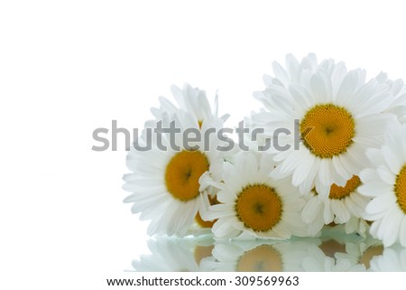 beautiful bouquet of white daisies on a white background - stock photo