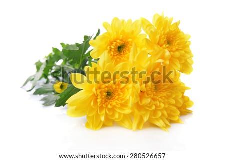 Beautiful bouquet of yellow chrysanthemum isolated on white - stock photo