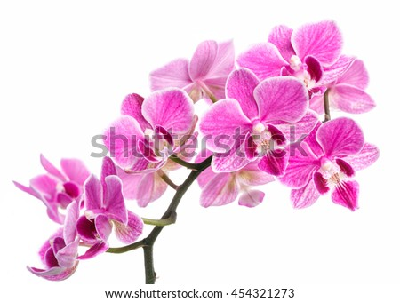 Beautiful branch of pink orchids isolated on a white background - stock photo